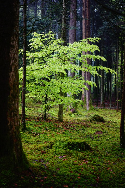 forest-1407624_960_720