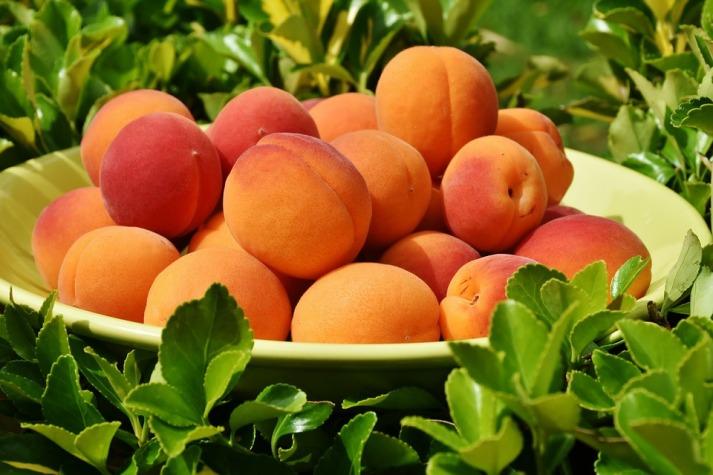 apricots-1522680_960_720.jpg